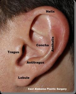 Normal ear anatomy
